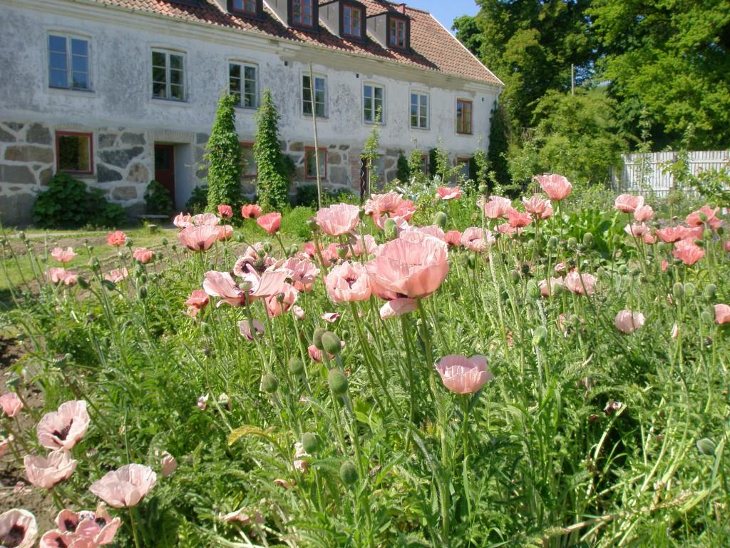 Mandelmanns trädgård i Rörum