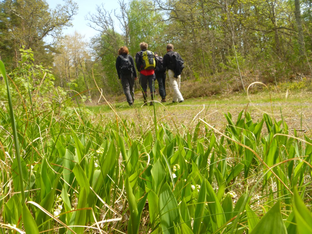Fem vandrare på väg