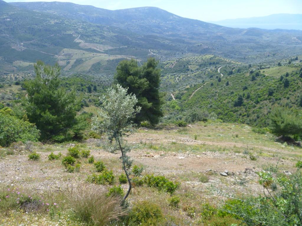 Ön Evia södra delen