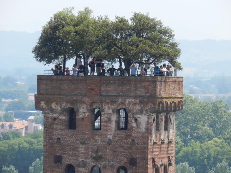 Kan man kalla den stadsskog? Överst i det höga tornet i Lucca