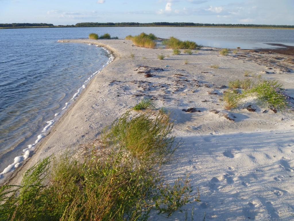 Längst ut på reveln mot lagunen och Skanörs ljung