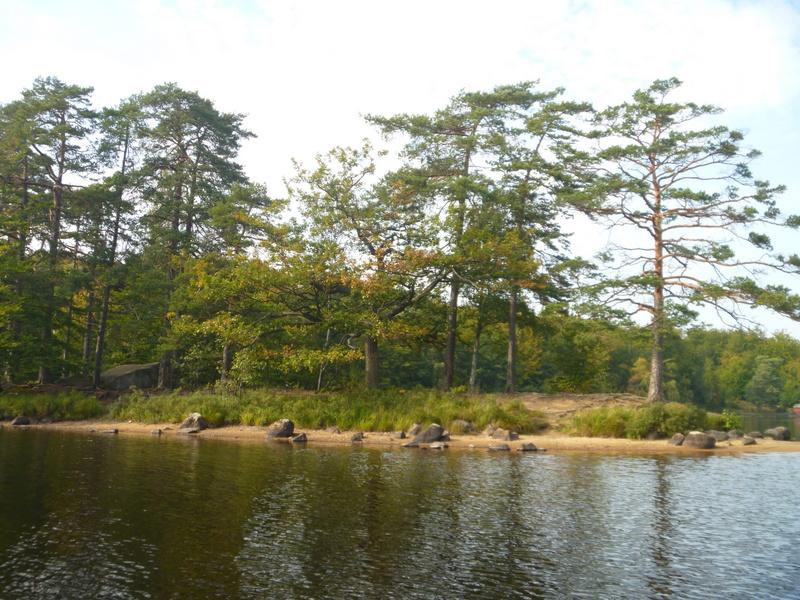Immelns vackra och vilda natur på en udde där Vellinge skollovskoloni ligger - barndomsminnen!
