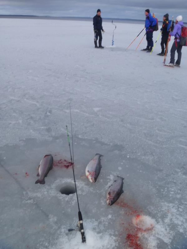 Fiskafänge på Siljan