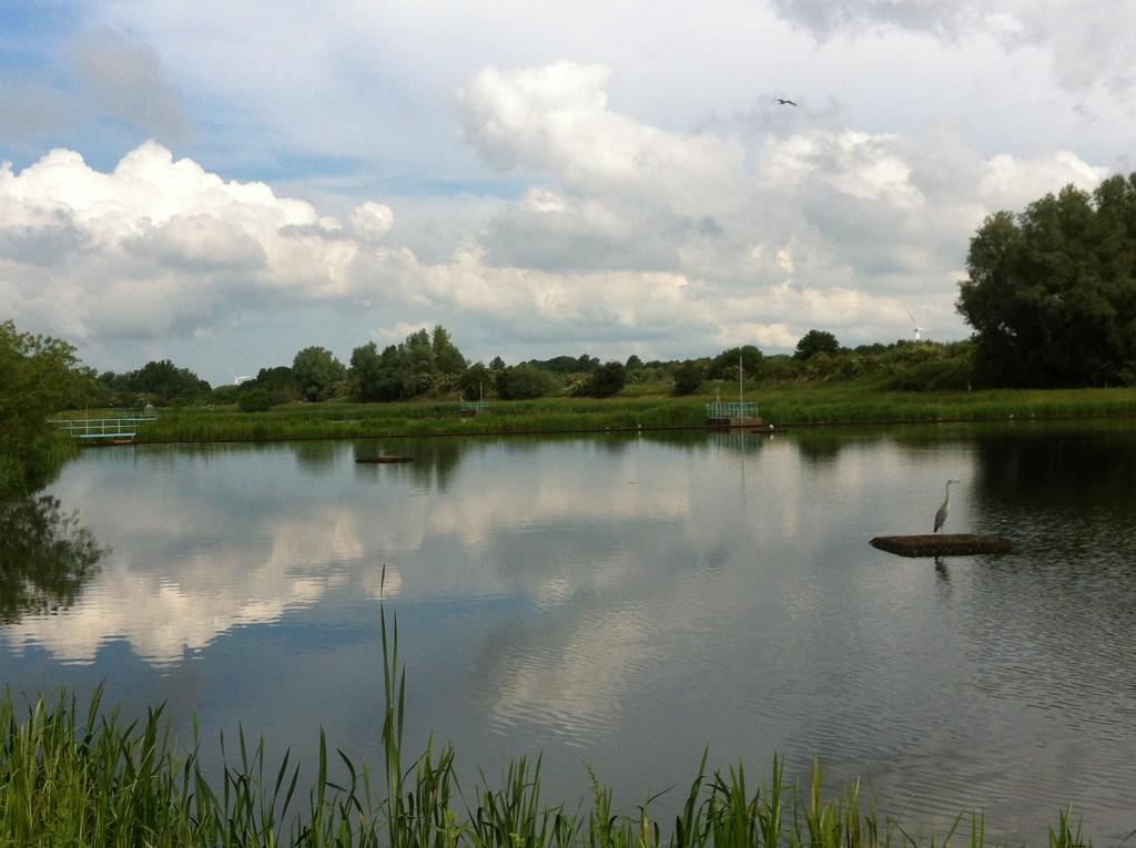 Dammarna vid Höjeå, unika i sitt slag