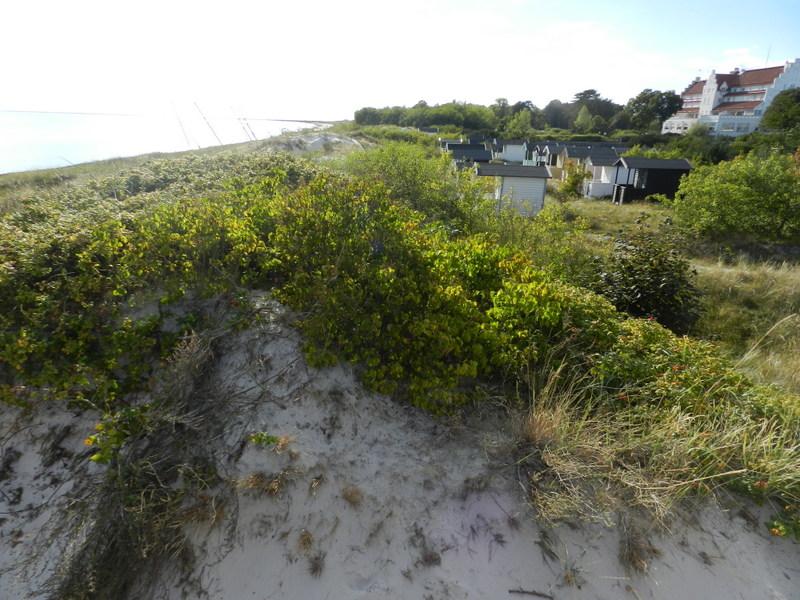 Stranden med Falsterbohus i bakgrunden