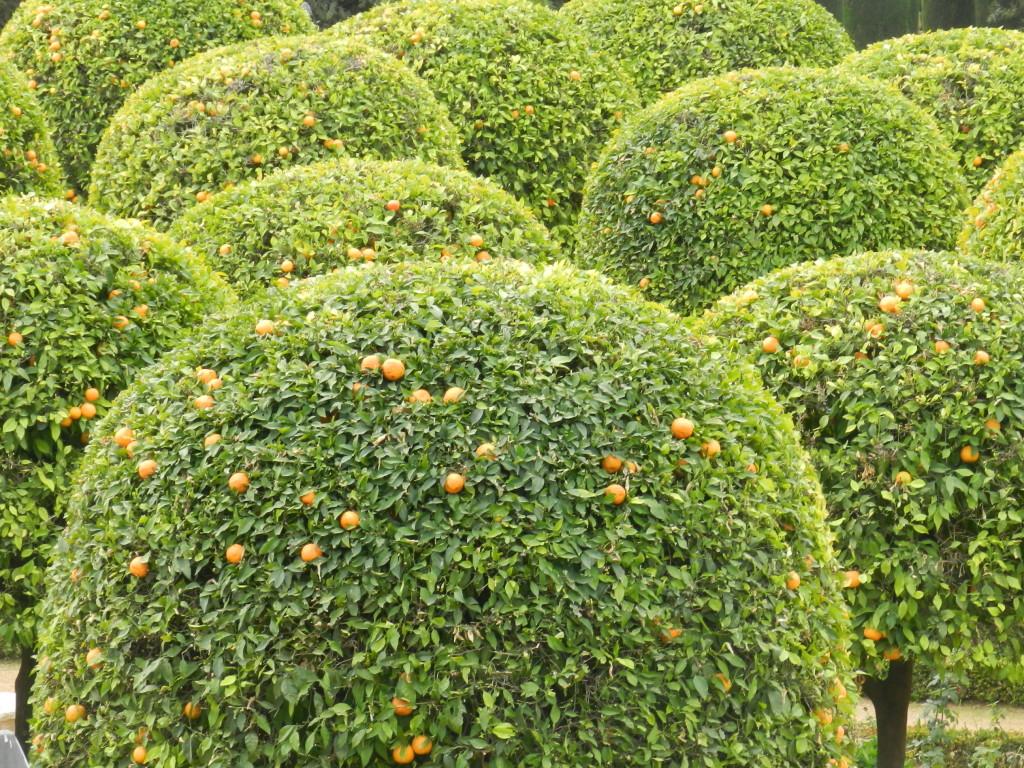 Spanien och apelsiner