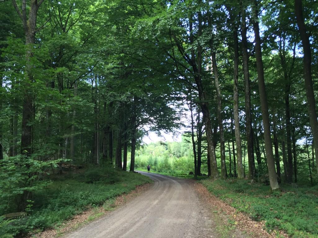 Fina bokskogar passeras på väg mot Boarp