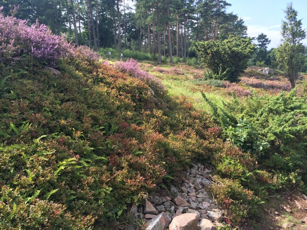Vacker växtlighet