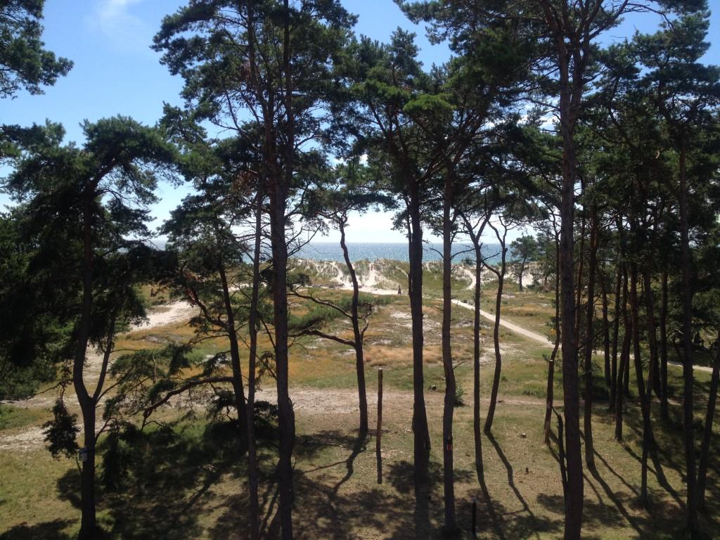 Utsikt från Naturum i Strandbaden