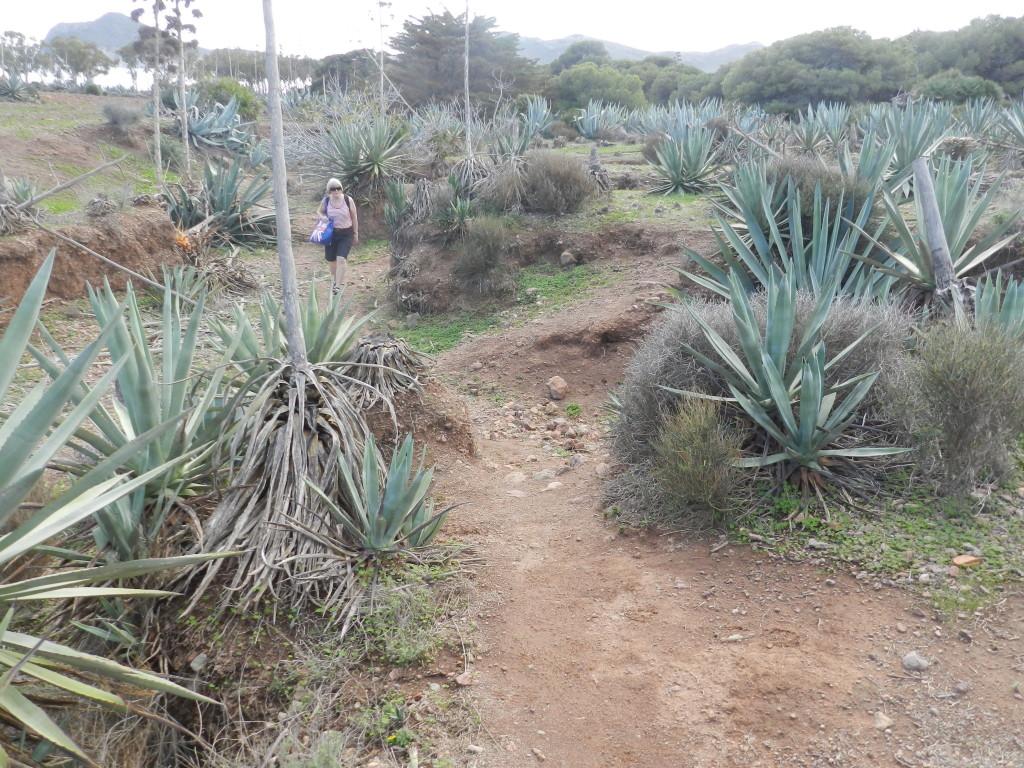 Kaktusområdet